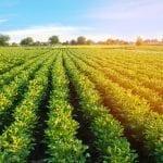 10 Produk Pertanian yang Potensial Untuk di Ekspor