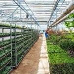 Investasi di Bidang Pertanian yang Menguntungkan
