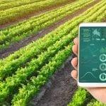 20 Peluang Usaha Pertanian Menguntungkan di Zaman Modern