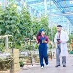 10 startup pertanian dan peternakan di Indonesia