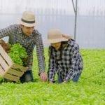 Bisnis Pertanian yang Banyak Disukai